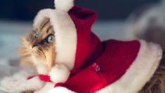 kočky_tapeta_32