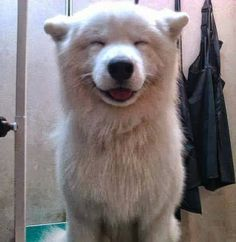 5 Most Adorable smiling puppy faces you have ever seen