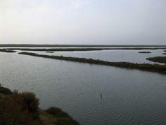 #Ria Formosa at #Santa #Luzia #Tavira Ria Formosa, Algarve, Natural Wonders, National Parks, Coast, Island, Beach, Water, Outdoor