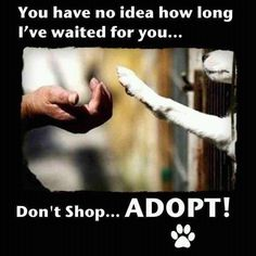 Adopt..don't shop while millions die in animal shelters every year.