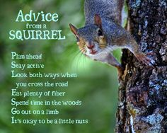 Advice From a Squirrel Advice Quotes, Life Advice, Good Advice, Wisdom Quotes, Animal Spirit Guides, Spirit Animal, Animals And Pets, Funny Animals, Animal Meanings