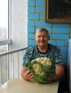 Способы выращивания цветной капустыЕсли говорить о том, как вырастить цветную капусту, то есть два способа: рассадный и семенной:При рассадном способе семена высеиваются в обогреваемо…