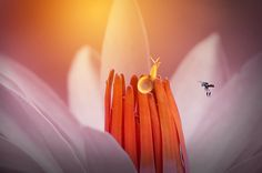 Snail, Bee, Snail with Bee, - null