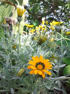 Detalle de una margarita Country, Plants, Flowers