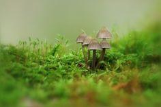 Photograph hidden secret by Ralf Thomas on 500px