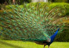 Birds of Prey at Warwick Castle