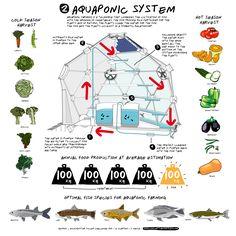 hydroponics using rabbits | http://www.genomicon.com/2012/04/rooftop-aquaculture/