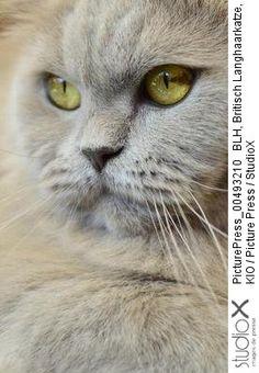 © KIO/PicturePress/StudioX chat portrait