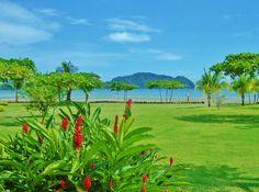 コスタリカ, ビーチ, 屋外, 緑, 自然, 花, ヤシの木, 風景