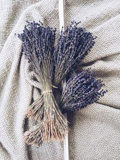 250+ Stems Lavender, Preserved Lavender, Dry English Lavender, Dry Lavender, Wedding, Home Decor Bunch Bouquet Dried Lavender Flowers Floral