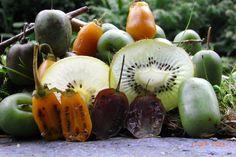 mini garten mini kiwi pflanzen pinterest kiwi pflanzen obst und pflanzen. Black Bedroom Furniture Sets. Home Design Ideas