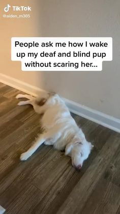 ‪The way he wakes his deaf and blind dog up is pure – Pets and Supplies Cute Little Animals, Cute Funny Animals, Funny Cute, Funny Dogs, Sweet Stories, Cute Stories, Happy Stories, Cute Puppies, Cute Dogs