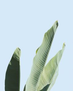 Tumblr Plant Wallpaper Wallpaper Pinte