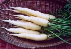 LUNAR WHITE CARROT (55 days) - Pinetree Garden Seeds - Vegetables  - 1
