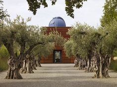 Olive Trees - Stone Edge Farm, Sonoma: Olive grove and observatory, a formal garden in the Jeffersonian tradition designed by landscape architect Andrea Cochran. Read more: http://www.sfgate.com/homeandgarden/article/U-S-gardens-from-Monticello-to-urban-farms-3460015.php#ixzz23lpK7F9c