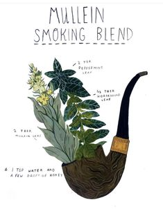 How To Craft Your Own Herbal Smoking Blends Herbal Academy Learn how to create your own herbal smoking blends that are enjoyable and can benefit your health at times Home Remedies For Uti, Uti Remedies, Natural Health Remedies, Herbal Remedies, Healing Herbs, Medicinal Plants, Natural Healing, Ayurvedic Herbs, Poisonous Plants