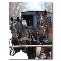 At the Hitching Post Postcards