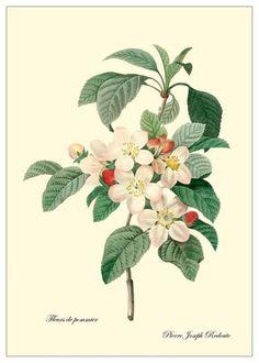 아름다운 꽃 그림들(수선화,달리아,아마릴리스...)Pierre Joseph Redoute : 네이버 블로그