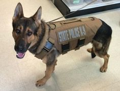 K9 unit searches high school for drugs http://wtnh.com/2017/02/28/k9-unit-searches-high-school-for-drugs/