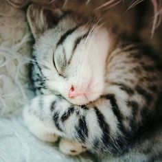 Sweet Dreams | Cutest Paw