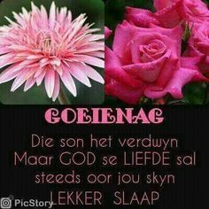 Goeie Nag, Goeie More, Afrikaans Quotes, Special Quotes, Day Wishes, Prayers, Rose, Flowers, Sleep Tight