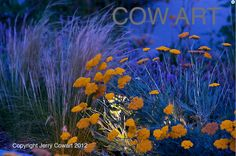 SALE 15% OFF Coupon code: SALE15OFF Flowers By Night Yellow Purple orange Fine by PhotosbyJerryCowart, $35.50  MORE OF MY PHOTOGRAPHS CAN BE SEEN AND PURCHASED ON MY WEBSITE:  www.jerry-cowart.artistwebsites.com
