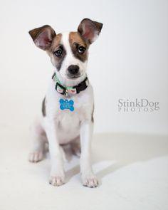 StinkDog Photography for MaxFund.org. Adopt!