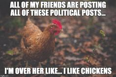 How long do chickens live? Commonly, chickens can live for 8 to 10 years. However, there are recent reports stating that they can even live for 20 years if Funny Chicken Memes, Chicken Humor, Chicken Runs, Woodworking Guide, Custom Woodworking, Woodworking Projects Plans, Backyard Farming, Chickens Backyard, Organic Chicken