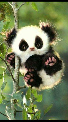 Cute Panda Baby, Baby Panda Bears, Cute Baby Bunnies, Baby Animals Pictures, Cute Animal Pictures, Animals And Pets, Cute Little Animals, Cute Funny Animals, Cute Cats