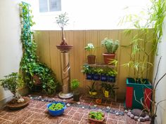 Balcony Garden India - After exploring various balcony gardens, I created this space in my home.
