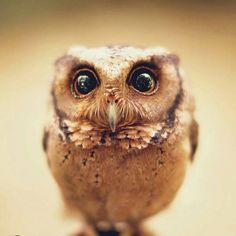 Beautiful owl :)