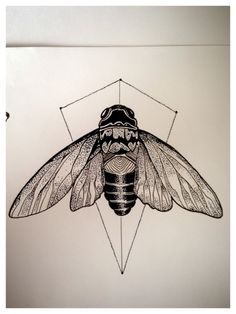 first new year cicada's. thedeadfox