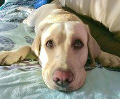 Daiiii dammi un biscotto per favoreeeee  Foto di: @bogno87  #BauSocial  Bau #ilovemydog #dog #puppy #pup #TagsForLikes #cute #eyes #instagood #dogs_of_instagram #pet #pets #animal #animals #petstagram #petsagram #cane #photooftheday #dogsofinstagram #ilovemydog #instagramdogs #nature #dogstagram #dogoftheday #lovedogs #lovepuppies #hound #adorable #doglover #instapuppy