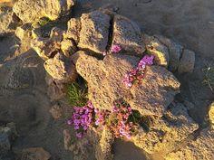 Island, Photo And Video, Nature, Naturaleza, Islands, Nature Illustration, Off Grid, Natural