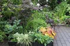 Tontti 559 m²: Avoimet puutarhat 2012: Citypuutarha