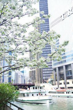 Spring Blossom Chicago Chicago Photography City