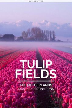 TULIP FIELDS THE NETHERLANDS MUST GO DESTINATIONS - anatolia cappadocia turkey, tulip fields netherlands, bamboo groves japan, kelimutu crater lakes indonesia, tunnel of love klevan ukraine, antelope canyon arizona, salt flat bolivia, travel destinations, travel ideas, bucket list countries, wanderlust - These TULIP FIELDS are just so magical! I feel like Its a disney movie backdrop!