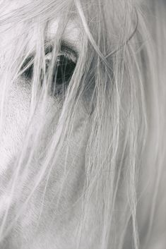 Horse Photos, Horses, Eyes, Up, Animals, Beautiful Places, Nice Asses, Pictures Of Horses, Animales