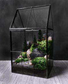 House Plants Low Level Light | Kitchn