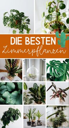 Uncomplicated houseplants - the most beautiful plants Tips & ideas - high ropes course