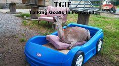 #goatvet likes this goat sleeping platform but the cushion will get dirty http://media-cache-ak0.pinimg.com/originals/ec/47/f5/ec47f5c2bc8ef7f3c46247a44db38ea7.jpg