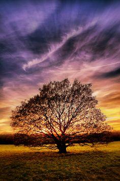 Tree by hayleyonfire.deviantart.com on @DeviantArt