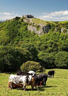 Carreg Cennen Castle, Carmarthenshire, Wales. Built in the 12th century, its location is spectacular overlooking the Brecon Beacon National Park