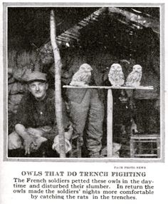"""""""Owls that do trench fighting."""" WWI image, Visual Studies Collection, Library of Virginia. Wwi, Trench, Virginia, Memories, Pets, Painting, Animals, Image, Collection"""