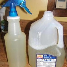 Make an all purpose organic pesticide from vegetables
