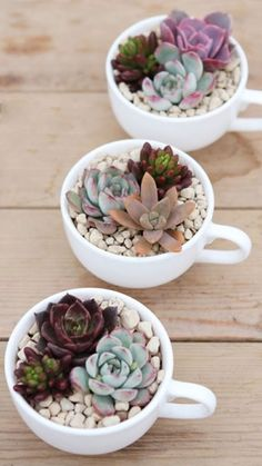 10 cool ideas to use the succulents in the decoration 10 coole Ideen, um die Sukkulenten in der Dekoration. Succulent Arrangements, Cacti And Succulents, Planting Succulents, Planting Flowers, Succulent Decorations, Terrarium Decorations, Propagate Succulents, House Plants Decor, Plant Decor