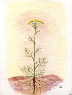 Take a plant from ground, a weed, etc... and have students draw it and paint it with watercolor. (Label parts of plant)