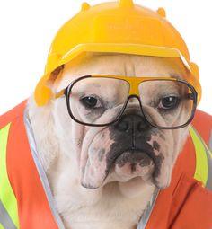 adult dog training tips online forum