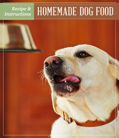 Homemade Dog Food | Recipe and Instructions | Homesteading Recipes | DIY Homesteading Recipes and Ideas at pioneersettler.com