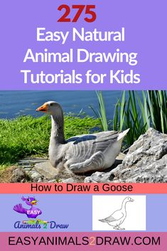 Learn how to draw an amazing Goose with this easy and inspirational step-by-step drawing tutorial for kids of all ages! Start by drawing the head. Draw a curved line in graphite pencil. to draw animals tutorials birds step by step Dinosaur Drawing, Cat Drawing, Nature Drawing, Drawing Birds, Fish Drawings, Horse Drawings, Animal Drawings, Drawing Tutorials For Kids, Drawing For Kids